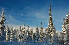 Exploring snowy forrests Finland, Exploring, Mountains, Winter, Nature, Travel, Winter Time, Naturaleza, Viajes