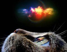Cats dream by luisbc.deviantart.com on @deviantART