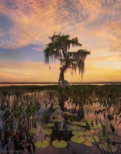 FloridaCypress Sunset