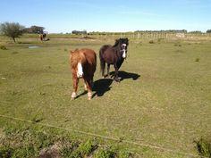 Viñedos, caballos, patos, y plantaciones de limones en Bodega El Legado Uruguay. Me olvidé de Luna que es la 1era que sale a recibirte cuando llegás