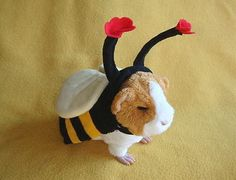 Image result for guinea pig costume
