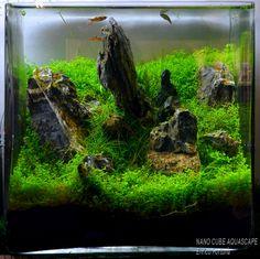 nano cube aquascaping