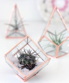 This Gorgeous DIY Glass Terrarium is a craft that you don't want to miss out on! Glass plant terrariums make fantastic mini planters for succulents and stunning home decorations.