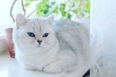 Расслабьтесь почти #пятница на дворе #relax its... Follow us on Instagram :D #cats #cat #catlover #lovecats #funny #fun #cute #socute #feline #felines #felinefriend #fur #furry #paw #paws #kitten #kitty #kittens #kittycat #kittylove #fluffy #fluff