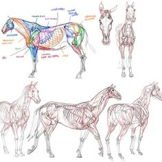 Saw the incredible Terryl Whitlatch at #schoolism this week. Now I feel incredibly inspired to start digging way more into animal anatomy. #anatomy #horses #creaturedesign