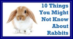 10 Things You Might Not Know About Rabbits! - Mr PetsMr Pets