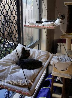 window cat hammock custome order501 large hammock picking up at sb   cat hammock      rh   pinterest