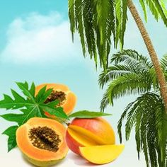Papaya Guava Mango Fragrance Oil- Best Slime Scents