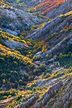El hayedo de la Pedrosa, en Segovia, y el Parque Natural del Hayedo de Tejera Negra en Guadalajara.