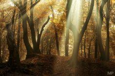 Shine a Light by Martin Podt on 500px
