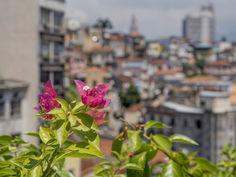 https://flic.kr/p/Fcmz7i | Flores no Centro da Cidade | Com o Morro da Conceição ao fundo...  Tenham um excelente fim de semana! :-)  _______________________________________________  Flowers in Downtown  With Conceição Hill in the distance...   Have a great weekend ahead! :-)  _______________________________________________  Buy my photos at / Compre minhas fotos na Getty Images  To direct contact me / Para me contactar diretamente: lmsmartins@msn.com