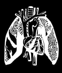 Original Handmade ANATOMICAL Papercutting - the RESPIRATORY SYSTEM - the heart & lungs