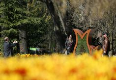 En güzel dekorasyon paylaşımları için Kadinika.com #kadinika #dekorasyon #decoration #woman #women ISTANBUL TURKEY - MARCH 31:  A woman poses for a photograph in Istanbul Turkey on March 31 2016. Every April different kinds of tulips are planted in Istanbul's parks avenues traffic roundabouts and open ground during the tulip season in Istanbul. T