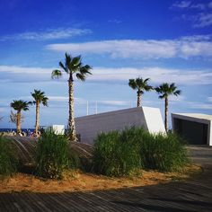 Nueva zona de la #Torre San Vicente con #palmeras y #montículos junto a la #playa. #sol #BenicassimParaiso #Benilovers #Benifornia #Castellón #Spain #mediterraneansea #palm #bluesky #tourism #Filter #lark