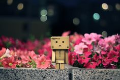 little box guy | Images copyright @ Danboard . @ haha.nu