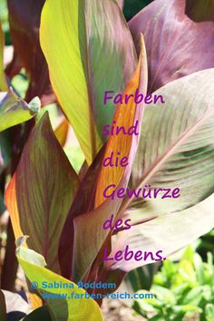 Farben sind die Gewürze desLebens http://www.farben-reich.com/