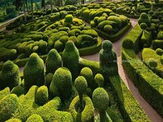 Sculpted boxwoods at the Château de Marqueyssac in Vézac, France - Bing Wallpaper. Bing daily images are all in bing. Provides Bing daily wallpaper images gallery for several countries. Boxwood Tree, Boxwood Garden, Boxwood Hedge, Topiary Garden, Garden Plants, Boxwood Topiary, Topiaries, Japanese Boxwood, Landscape Design