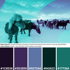 Duotone Effect & Free Mood Boards: Iceland Horses – Mind Frame Shift Science Art, Science Nature, Adobe Color Wheel, Pretty Desktop Backgrounds, Color Palette Generator, Icelandic Horse, Online Coloring, Modern Graphic Design, Original Image