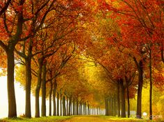 Love Fall! Don't have to travel far to experience this one. :~]