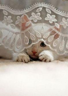 Peek A Boo Kitten ~