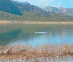 Cisne en el Dique Potrerilllos Mountains, Nature, Travel, Scenery, Places, Naturaleza, Viajes, Trips, Nature Illustration
