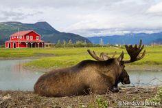 Seward Highway – Alaska Wildlife Conservation Center