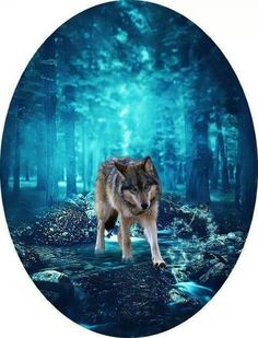Wolf and Blue Forest