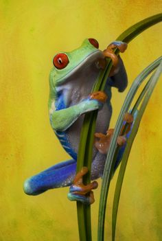 Sunny frog by AngiWallace.deviantart.com on @deviantART  . Lots of Frog pictures here.
