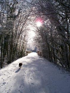Plymbridge Woods in winter (& Willow!)