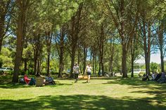 The 25 Best Picnics in Cape Town (+ the Winelands) 2019