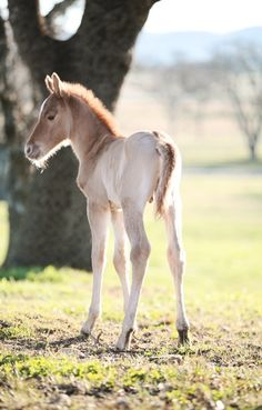 .I love babies. One of the best things I've ever done was raise a foal to adulthood. Lots of challenges, but so much fun!