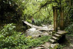 Jungle Bridge      Valle de Cocora, Colombia
