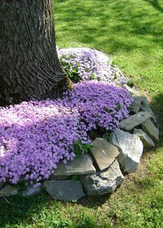 DIY Lawn Edging Ideas For Beautiful Landscaping: Flowers and Natural Stones Arou. DIY Lawn Edging Ideas For Beautiful Landscaping: Flowers and Natural Stones Around a Tree Landscaping Around Trees, Landscaping With Rocks, Front Yard Landscaping, Luxury Landscaping, Natural Landscaping, Landscaping Plants, Inexpensive Landscaping, Landscaping Melbourne, Farmhouse Landscaping