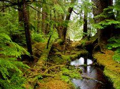 Gwaii Haanas National Park (Haida Gwaii, British Columbia, Canada)
