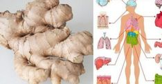 Eat Ginger Every Day for a Month and These Things Will Happen to Your Body - Natural Health and Beauty Remedies Hypothyroidism Diet, Thyroid Diet, Thyroid Health, Fast Weight Loss, Lose Weight, How To Eat Ginger, Zero Calorie Foods, Libido, Natural Colon Cleanse