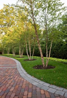 (Windsor Companies traditional landscape) Birch trees lining the driveway; - (Windsor Companies traditional landscape) Birch trees lining the driveway; pretty, not dense, and e - Brick Driveway, Tree Lined Driveway, Driveway Design, Brick Pavers, Driveway Ideas, Driveway Entrance Landscaping, Permeable Driveway, Brick Pathway, Circular Driveway