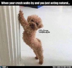 When your crush walks by and you just acting natural (Funny Animal Pictures) - #crush #natural #walk by