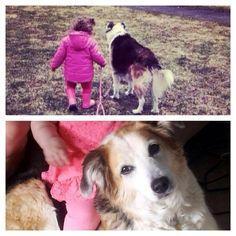 Lost Dog - Terrier - Ottawa, ON, Canada K1T 1S3