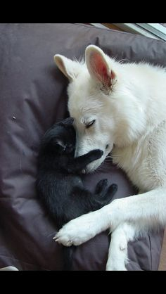 .Awww...looks like my Wolfie and Kittles.but I think they would never actually let me see them like that!!..