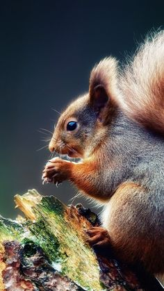 squirrel, tree, branch, food