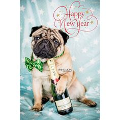 Happy #NewYear #2018 Pug lovers!  Thank you to our dear friends at @vikingmops  Check them out! . . . #pugsoftheday #pugsnotdrugs #puglife #puglove #pugsdaily #mopsliebe #happynewyear #welcome2018 #speakpug #pugbasement #fawnpug #hermoso #carlino #cutedogs #pugparty #nye