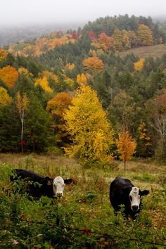 Autumn Countryside by Rikki Snyder Photography.... #Relax more with healing sounds: