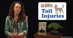 Tail injuries are much more common in dogs than cats. Here are some dog tail injuries and how you can prevent them.