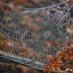 Not typically seen as beauty, usually a scary decoration, but a real spiderweb is a work of art.  I think they're gorgeous and amazing.