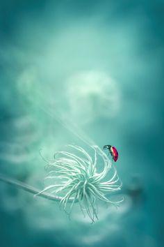 Ladybug by Marta Sysło ( Vanadis )
