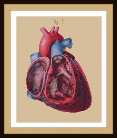Antique Anatomical Heart CutAway cross stitch pattern by Whoopicat, $8.00