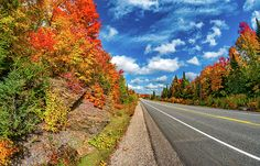 Algonquin.  Highway 60, the lone route across the vast wilderness of Ontario's Algonquin Provincial Park, offers one of the world's most spectacular autumn drives. The vibrant sugar maples dominate in this section of the park. The adventurous can choose from dozens of canoe and backpacking routes and travel for hundreds of miles through pristine lakes, rivers and mountains.