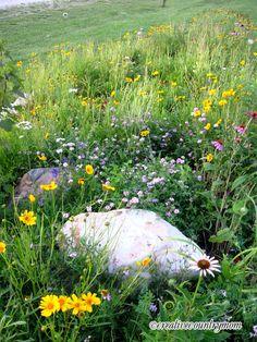 Wildflower Garden... to see my garden online visit.... http://creativecountrymom.blogspot.com/  ~Brooke