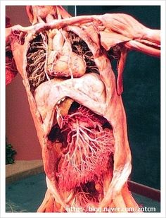body worlds- I would love to see this exhibit someday!!!