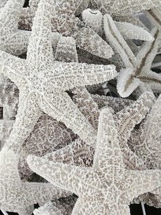 Free your Wild :: Ocean Bounty :: Shells :: Sea glass :: See more natural treasures Shades Of White, Grey And White, White Aesthetic, Jolie Photo, Ocean Life, Marine Life, Coastal Living, Under The Sea, Starfish
